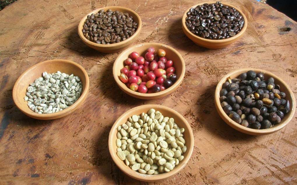 Photo of Types of Coffee Beans: Buying Guide & Reviews